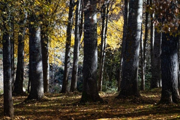 Bosque en la Sierra del Rincón en las inmediaciones de La Hiruela