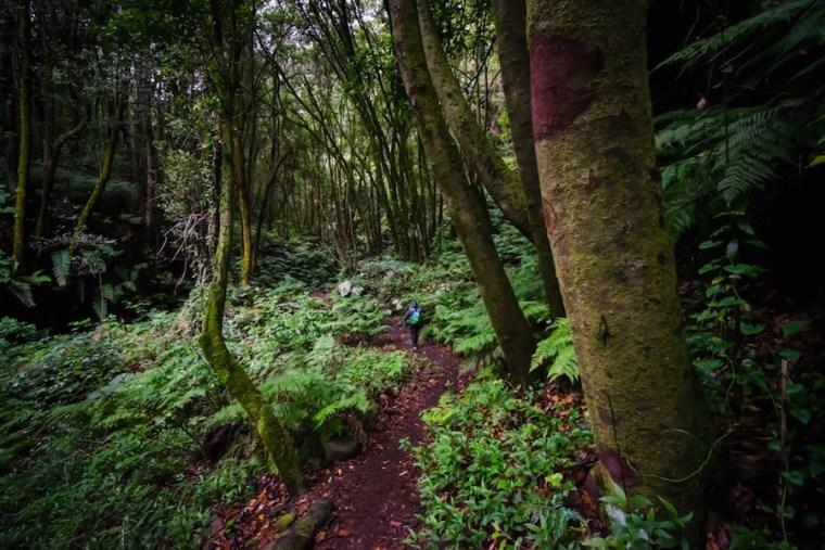 Ruta Cubo de la Galga en La Palma