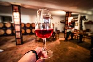 Cata de vinos en Bodegas Crisve, Socuéllamos