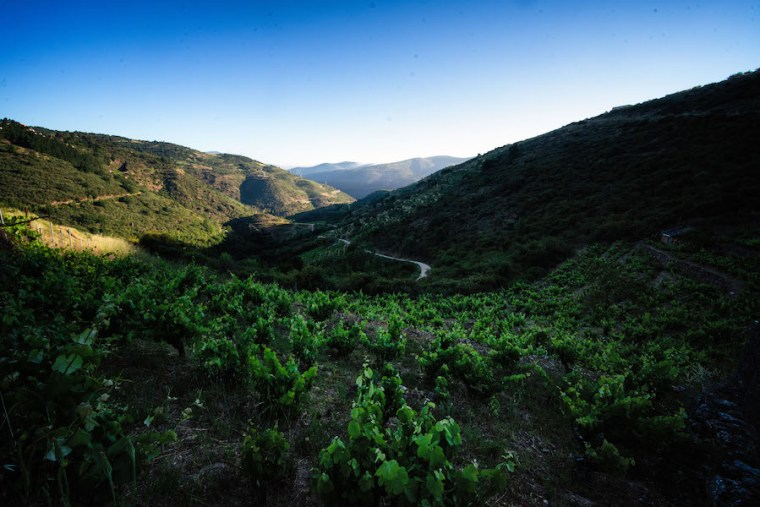 Viñedos en las laderas del río Bibei en la Ribeira Sacra, Ourense