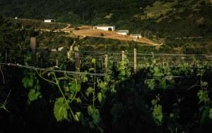 Edificios escalonados de la bodega Domino do Bibei en la Ribeira Sacra