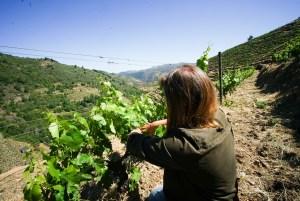 Visita por los viñedos de Domino do Bibei en Ourense, Ribeira Sacra