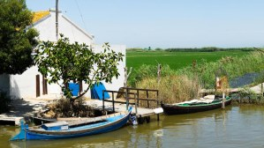 Embarcadero y campos de arroz en El Palmar, Albufera