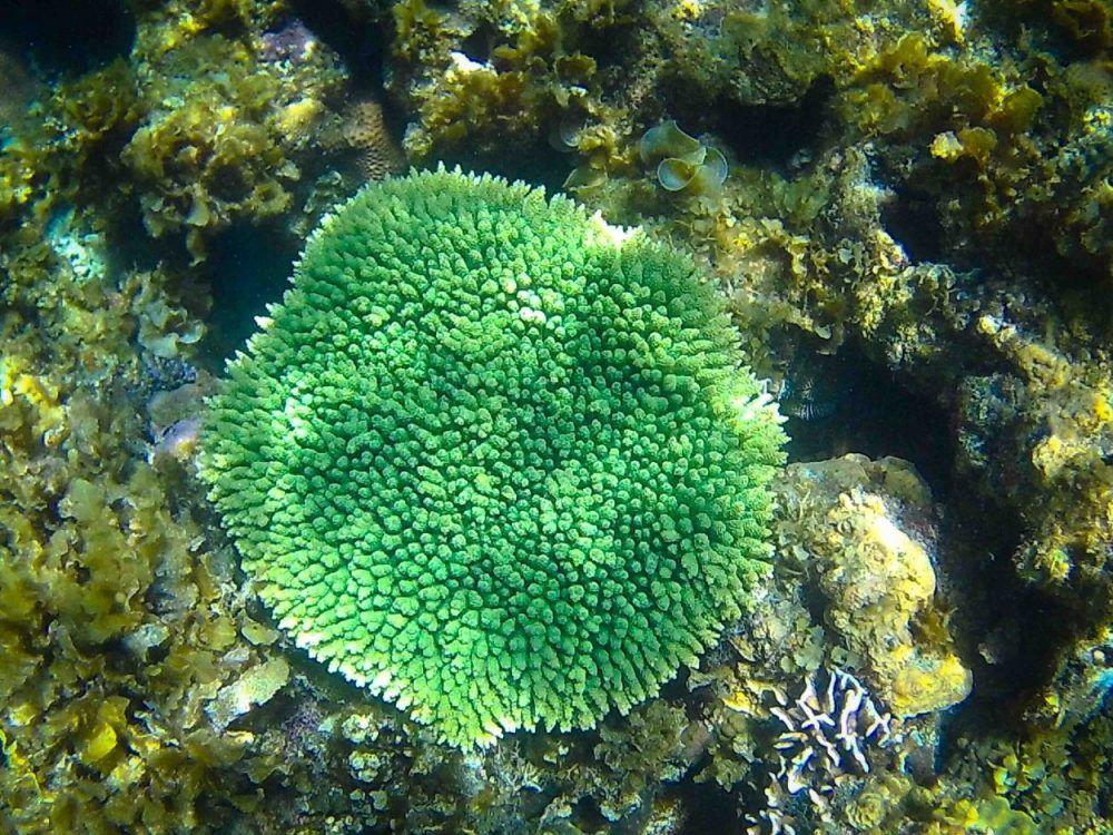 Twin-Reef-Port-Barton