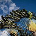 Un día en Guadalupe Las Antillas Francesas