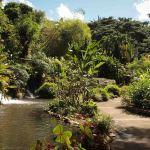 Jardin-Botanico-Deshaies-Guadalupe