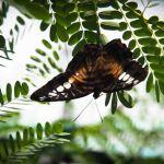 Habitat Butterflies Conservation Center