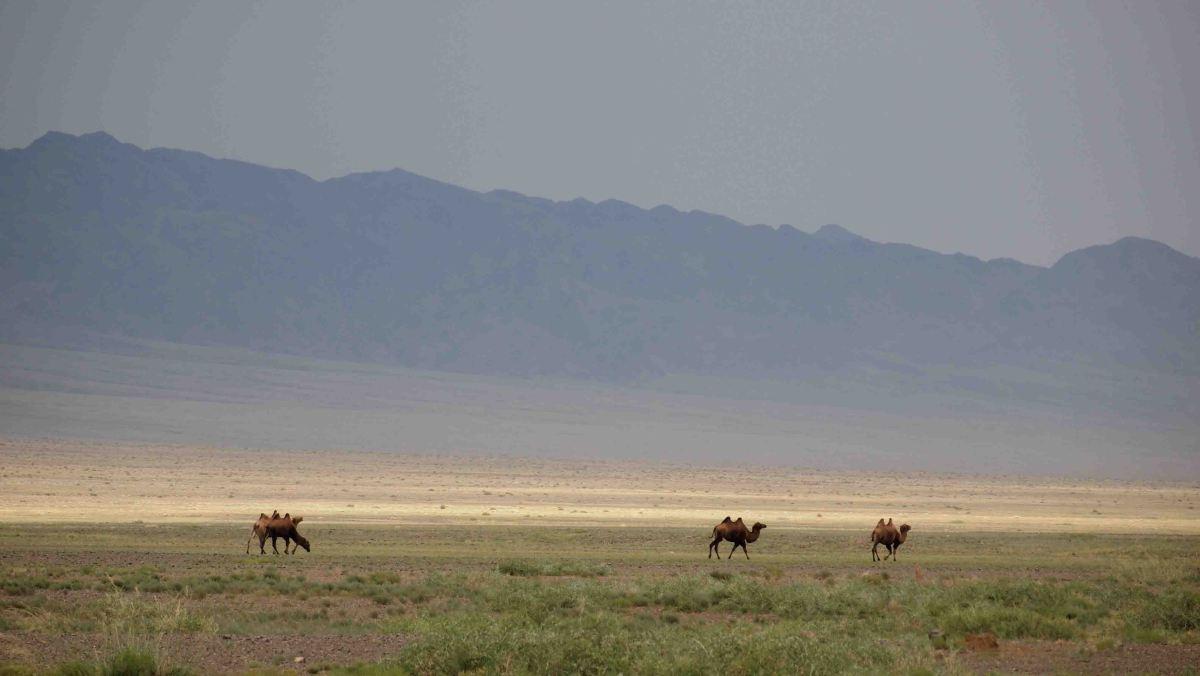 Que ver en el Desierto del Gobi | Itinerario por uno de los desiertos más grandes del mundo