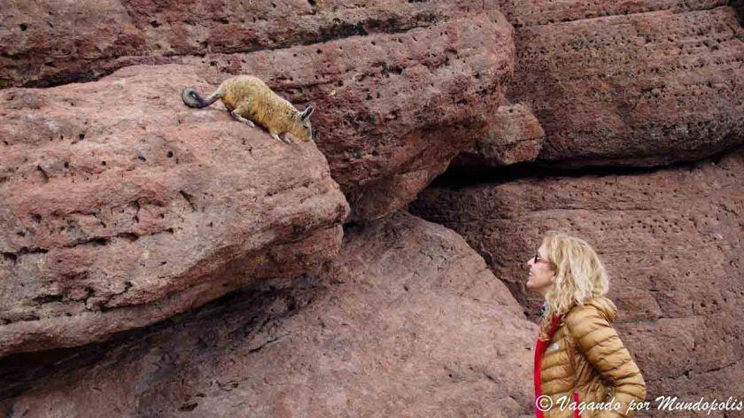 vizcachas-desierto-de-siloli