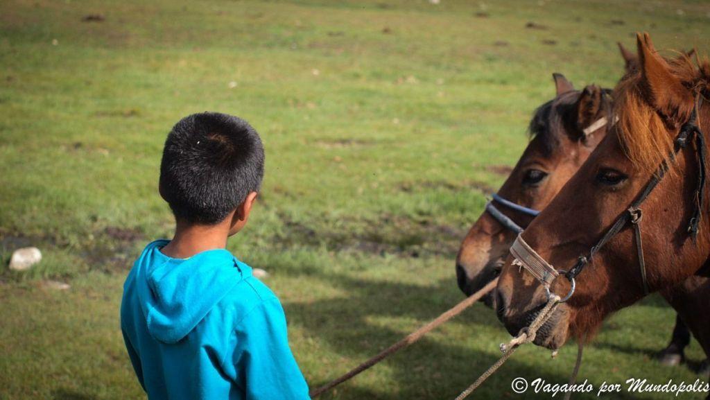 caballos-mongoles-tsenkher