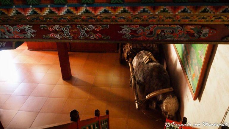 museo-arkhangai-aimag-tsetserleg