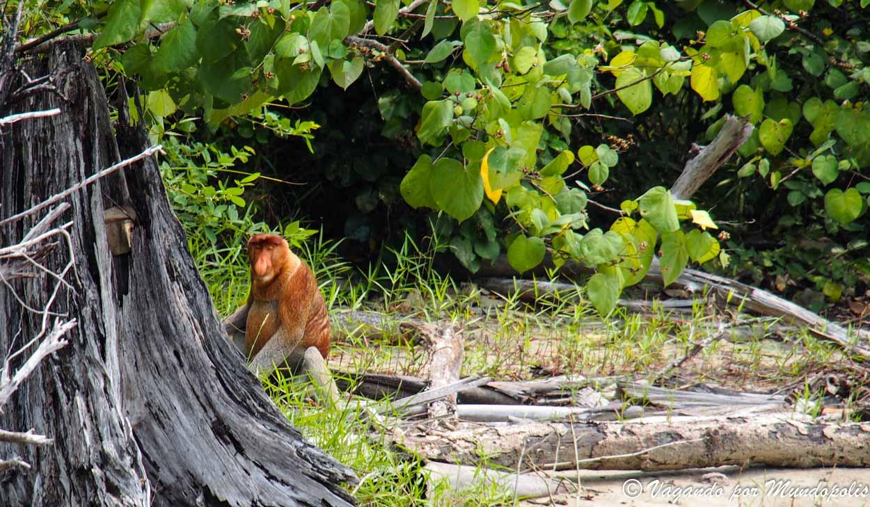 parque-nacional-bako-malasia