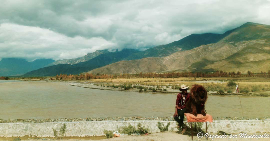 mastin-tibetano