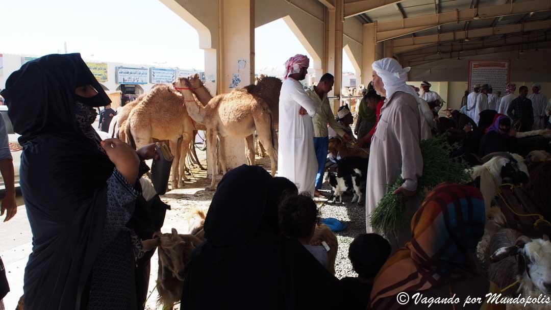 mercado-ganado-sinaw-e-ibra-que-hacer-en-nizwa