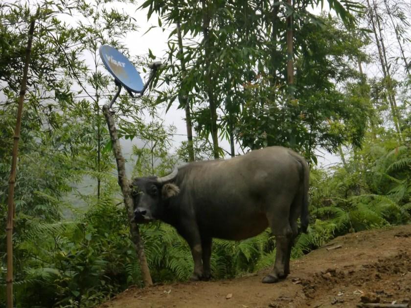 Buffalo - A trip through Vietnam