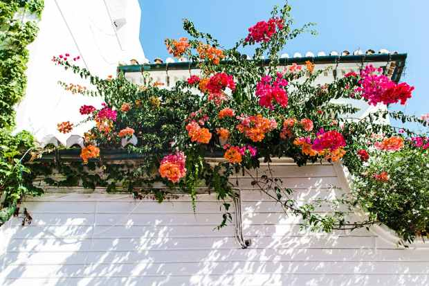 White house and wall decorated with pink and orange flowers and some greenery. The background is a clear blue sunny sky.