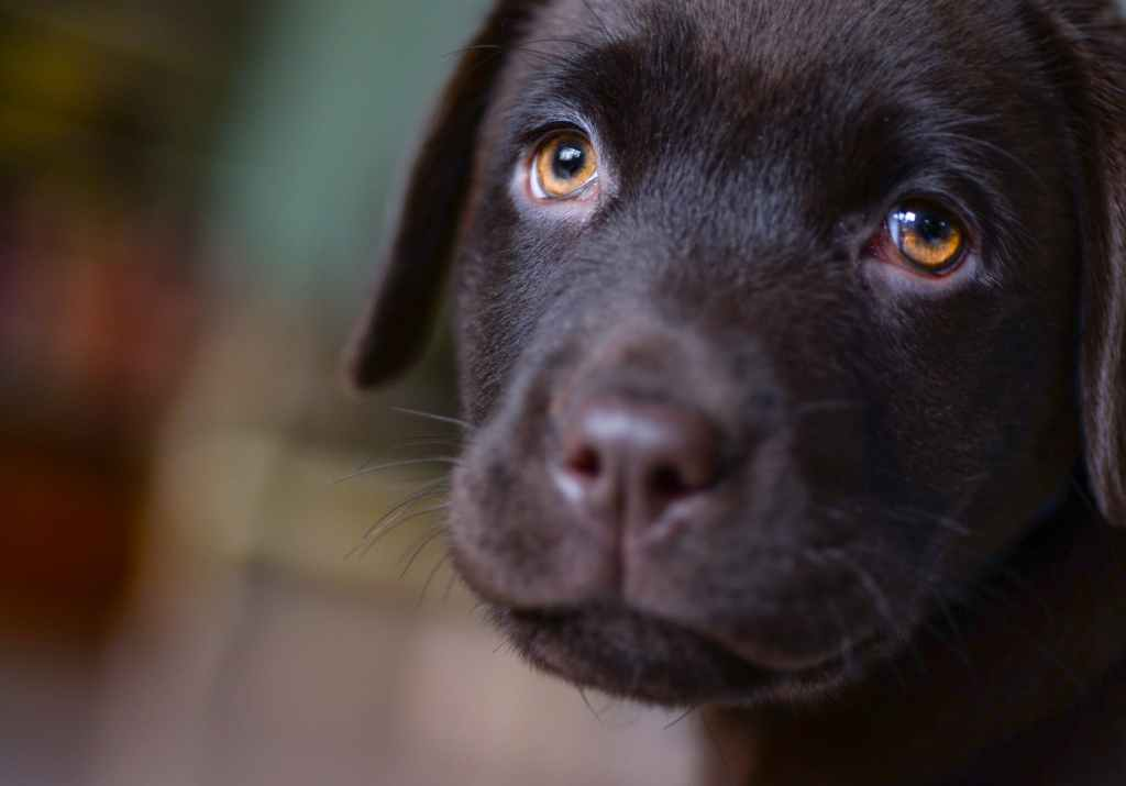 27 Sad Quotes With Sad Dogs (With a Dash of Hope) - Vaguely Feel