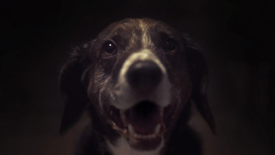 The Carnivores Movie Film