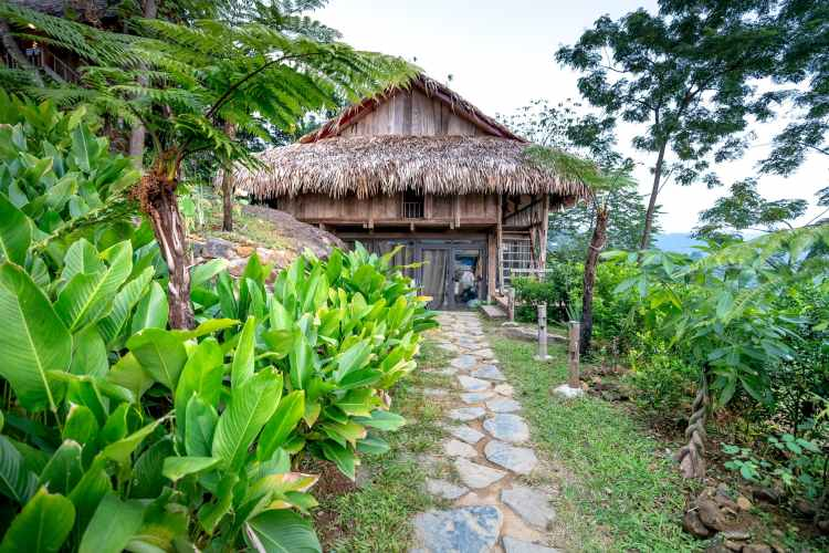 small hut with green plants