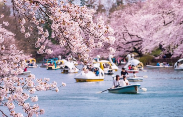 Boats in Inokashira park