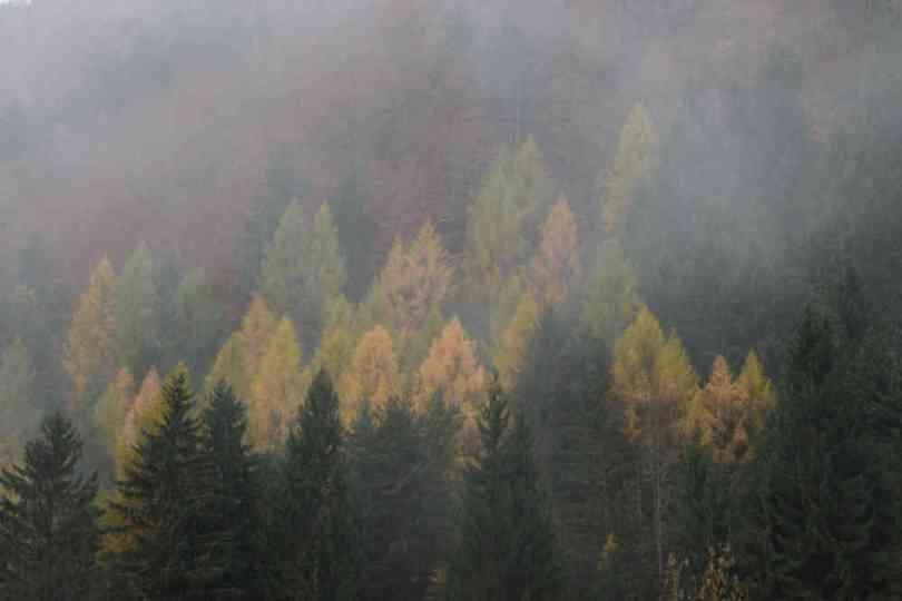 img_9178-automne-valbonnais
