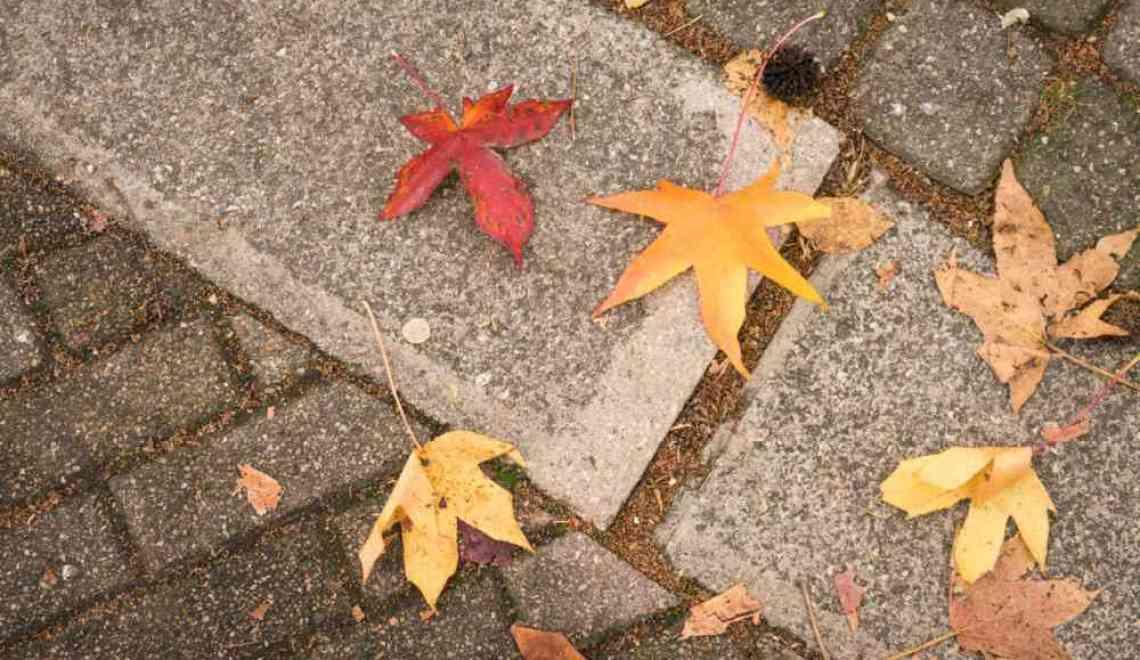 Ode visuelle à l'automne
