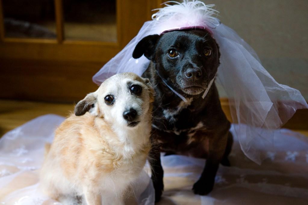 duxbury-maritime-school-wedding-vail-fucci-2
