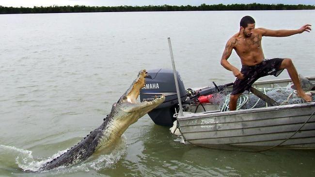 alligator attacking man