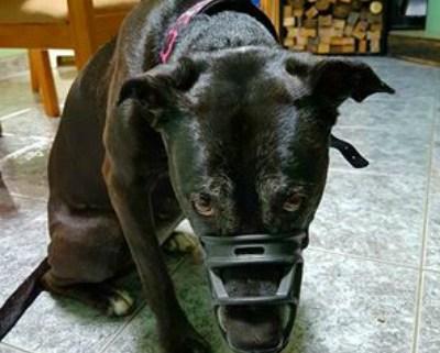 muzzle3