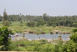 Views from Srirangapatna - The Kaveri River