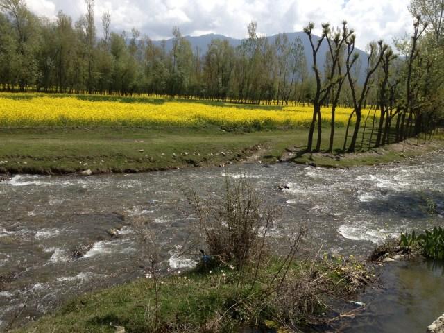 Lidder River Pahalgam