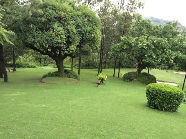 fresh verdant greenery