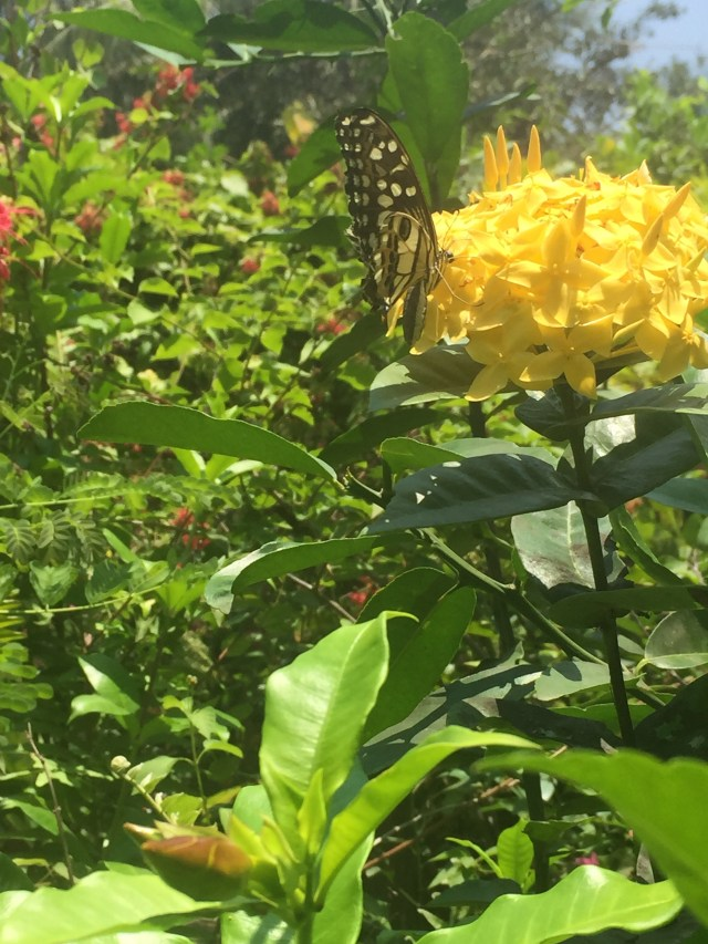 Beautiful butterfly park