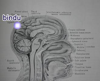 bindu-location