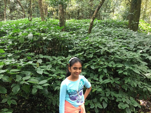 Places with Greens in Taj Coorg