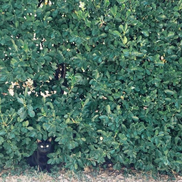 In the bush #vscocam