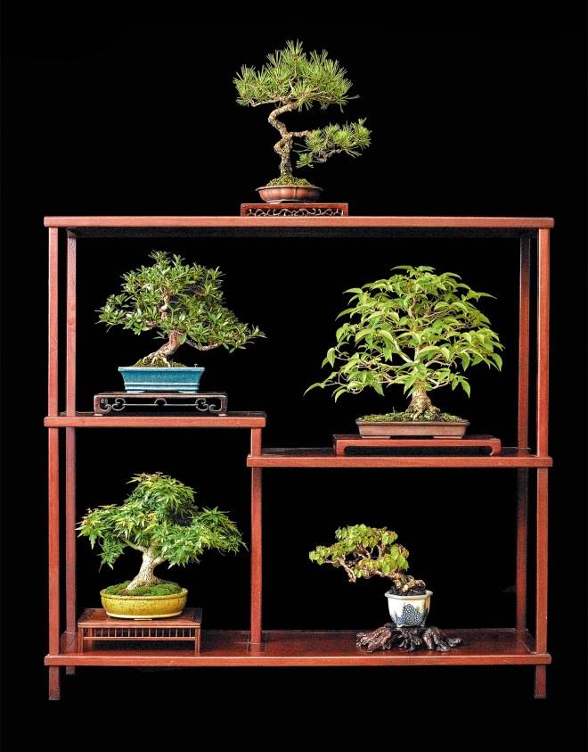 tree-5342024-copy
