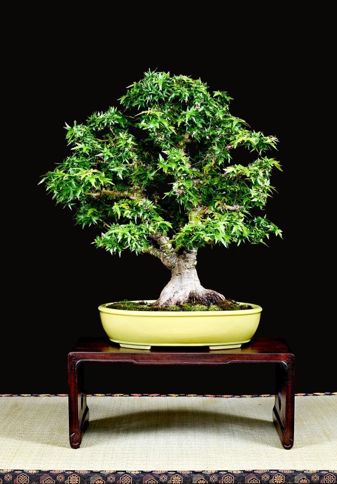 TREE 26-4816
