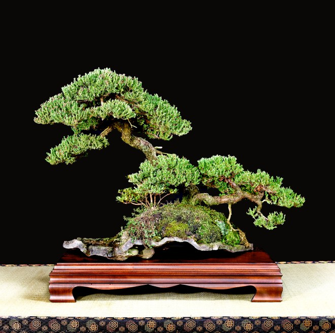 TREE 33-4847
