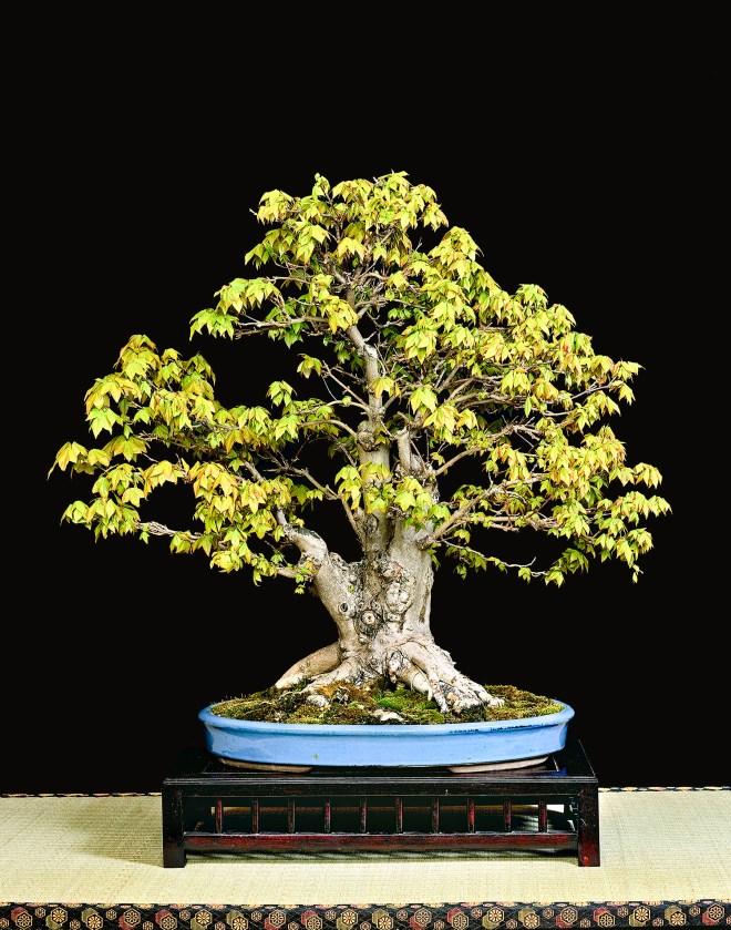 TREE 4-4654C