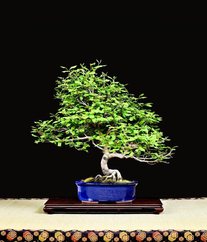 TREE 48-4903