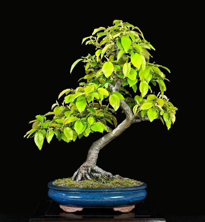 TREE 1939803.JPG