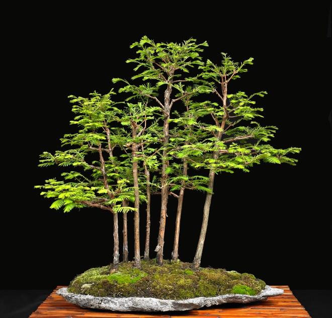 TREE 2639826.JPG