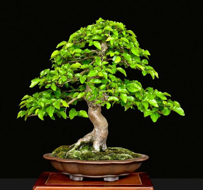 TREE 4140212.JPG