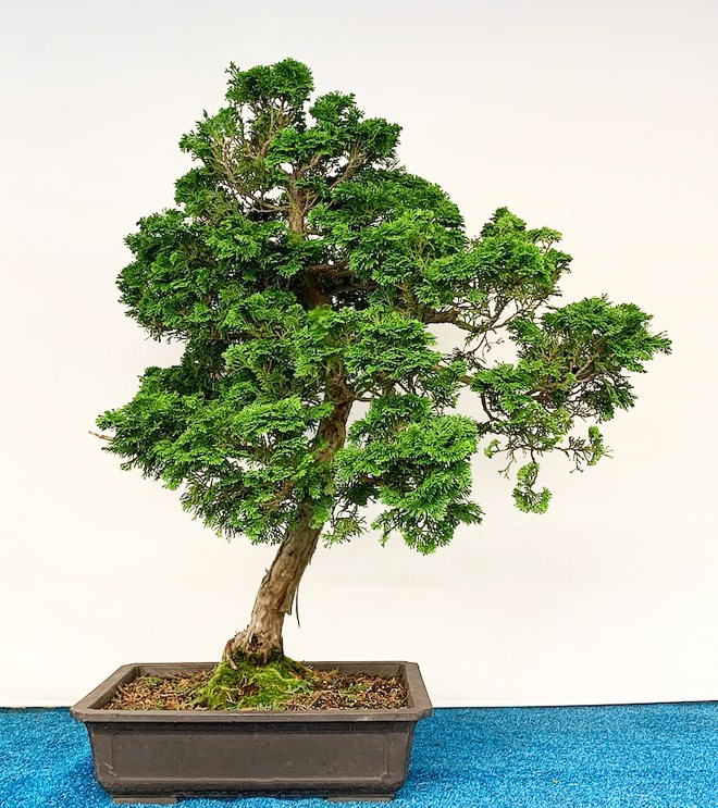 2019 Midwest Bonsai Exhibition Coming Up Soon Valavanis Bonsai Blog