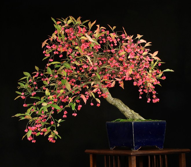 SPINDLE TREE.JPG
