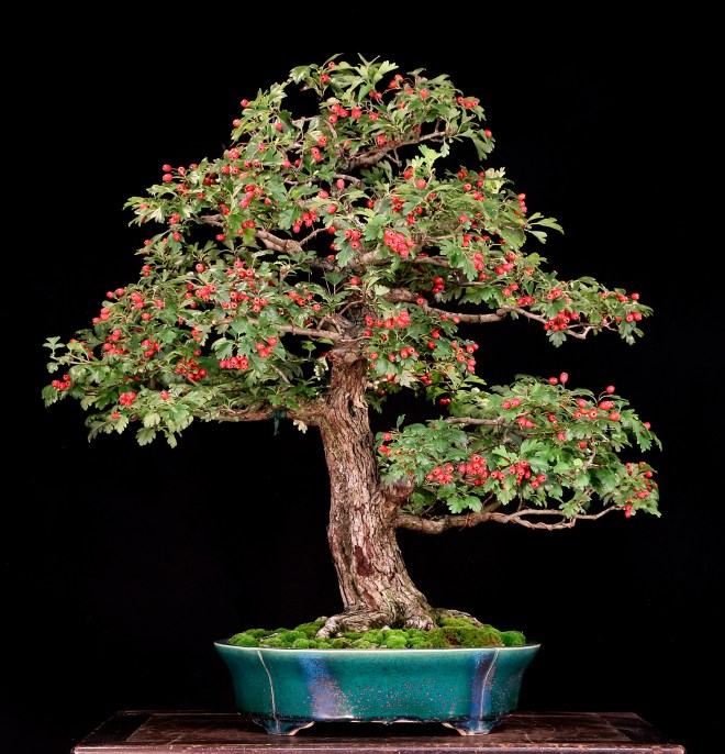 Valavanis Bonsai Blog Welcome To My Bonsai World