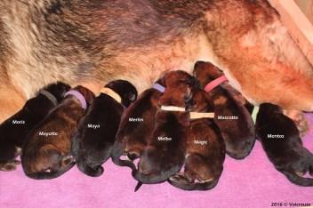 Les bébés à 5 jours