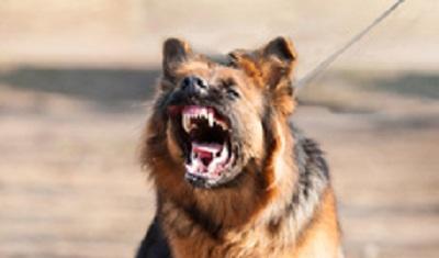 L'agressivité est l'expression d'une souffrance chez le chien