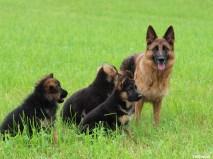 India et ses 3 fils